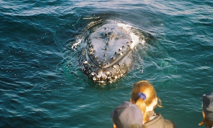 Chris' Whale Watching Tours - Old Monterey Business District: $24.99 for a Three-Hour Whale-Watching Cruise from Chris' Whale Watching Tours (Up to $35 Value)