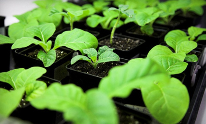 Root 66 Aquaponic Garden Shop - Brookfield:  Intro or Advanced Indoor-Gardening Class and Organic Seeds at Root 66 Aquaponic Garden Shop in Brookfield (Half Off)
