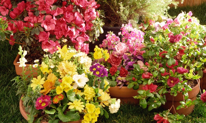 McDonnell Horticulture Inc. - Cameron: Plants and Gardening Supplies at McDonnell Horticulture Inc. (Up to 50% Off). Two Options Available.