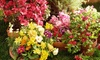 OOB McDonnell Horticulture Inc. - Cameron: Plants and Gardening Supplies at McDonnell Horticulture Inc. (Up to 50% Off). Two Options Available.