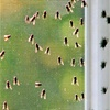 Pest and Mosquito Control (Up to 52% Off)
