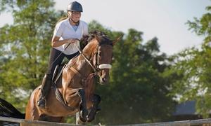 Circolo Ippico Team Zaccheddu: 3, 5 o 10 lezioni di equitazione da Circolo Ippico Team Zaccheddu (sconto fino a 82%)