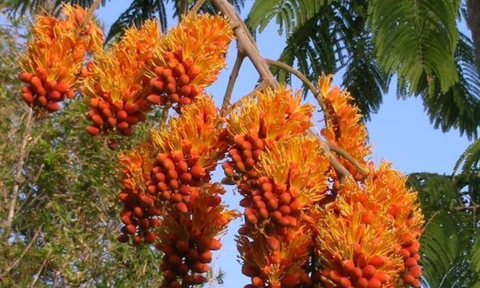 Richard Lyons Nursery, Inc - Miami: $10 for $20 Worth of Trees, Plants, Flowers and More at Richard Lyons Nursery, Inc