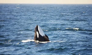 $24.99 For A Three-hour Whale-watching Cruise From Chris Whale Watching Tours (up To $35 Value)