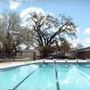 Up to Half Off Swim Lessons at Del Norte