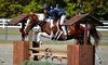 Springfield Sport Horses - Holland: Horseback Rides or Lessons from Springfield Sport Horses (Up to 47% Off). Three Options Available.