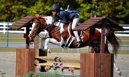 Horseback Lessons or Kids' Party at Springfield Sport Horses (Up to 75% Off). Four Options Available.