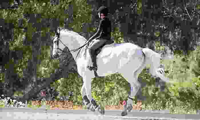 Lincourt Stables - Atwater Village: One, Three, or Five Private English-Style Saddling and Horseback-Riding Lessons at Lincourt Stables (Up to 63% Off)