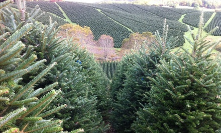 Home-Delivered Balsam Fir from BL Christmas Trees (Up to 58% Off). Three Options Available.