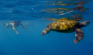Hawaiian Diving Adventures, LLC: Up to 52% Off Guided Snorkeling Tour at Hawaiian Diving Adventures, LLC