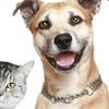 55% Off Veterinary Services