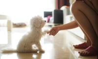 Sesión de peluquería con baño, arreglo y corte para un perro de hasta 10, 20, 45 o más kg desde 12,95 € en Perrukys
