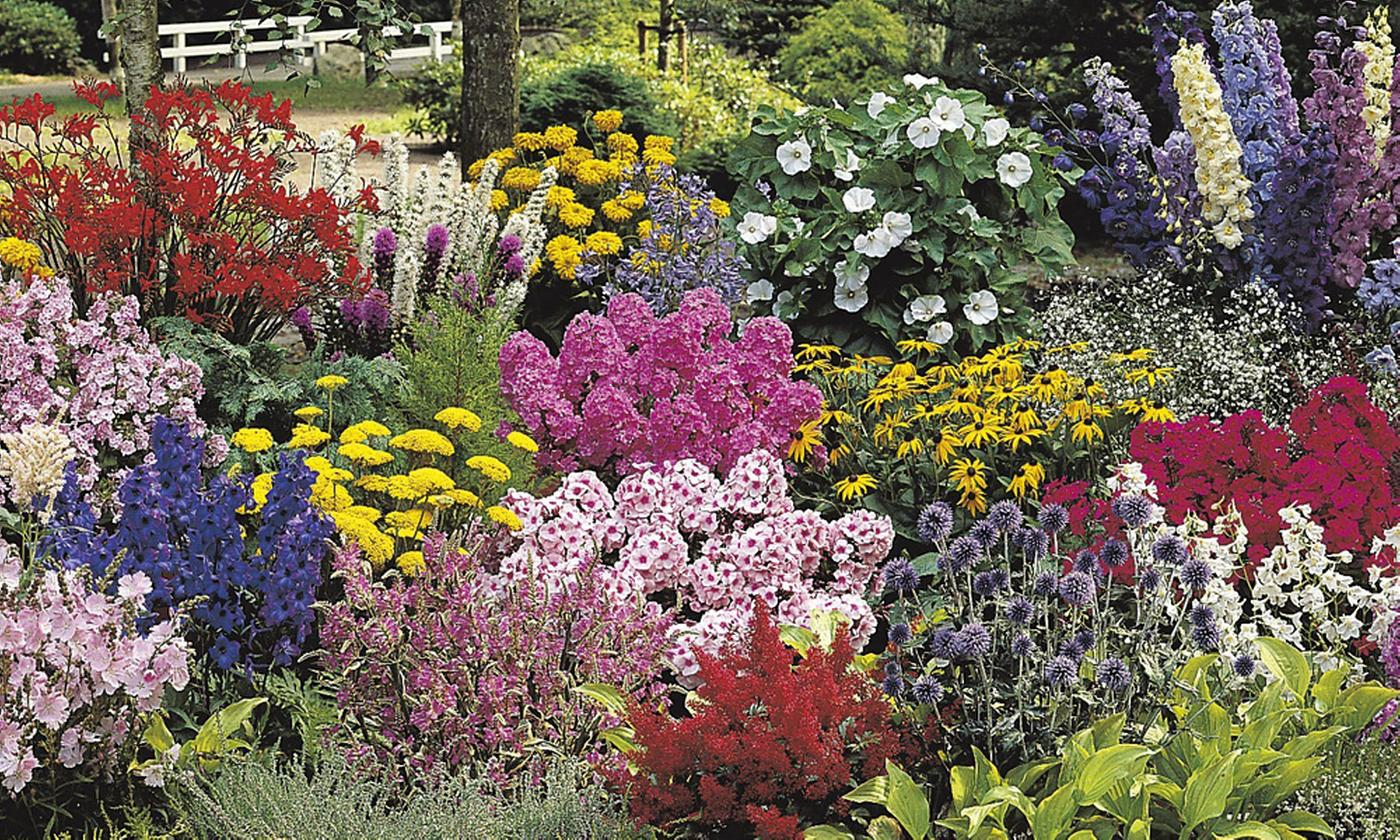 British Grown Border Collection Up to 15 Plants
