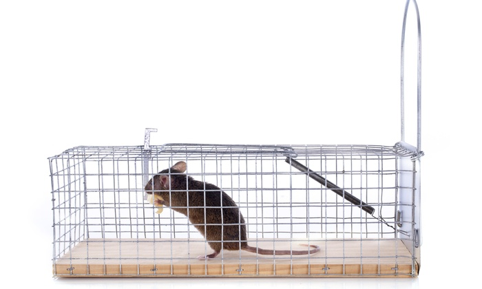 MayDay Wildlife Services, Inc. - Atlanta: Two-Week Rodent-Trapping Program and Entry-Point Inspection from Mayday Wildlife Services (55% Off)