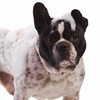 Up to 52% Off Grooming Packages  at Palm Beach Puppies