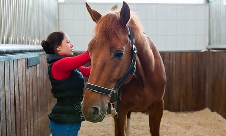 Two 60-Minute Private Indoor or Outdoor Horseback-Riding Lessons at Luton Riding Academy (Up to 51% Off)