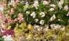 The New York Botanical Garden - Bronx Park: Admission to The New York Botanical Garden in the Bronx. Three Options Available.