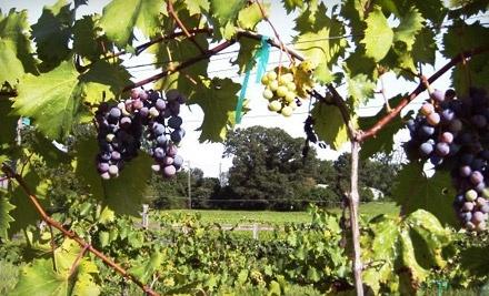 Vizzini Farms Winery - Vizzini Farms Winery in Calera