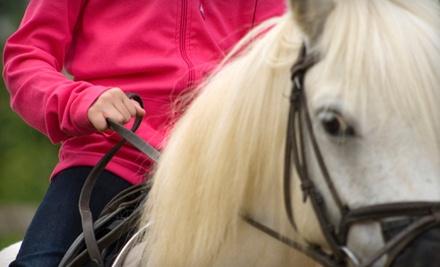 Half-Hour Private Riding Lesson (a $40 value) - University Equestrian Center in Orlando