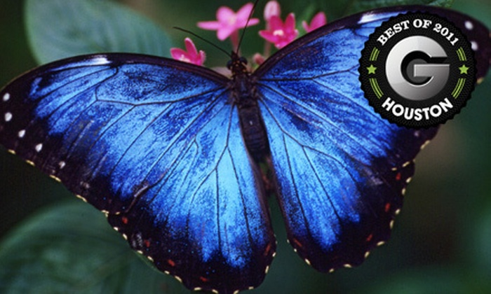 Houston Museum of Natural Science - Houston: Butterfly or Planetarium Outings for Four at Houston Museum of Natural Science (Up to 56% Off)