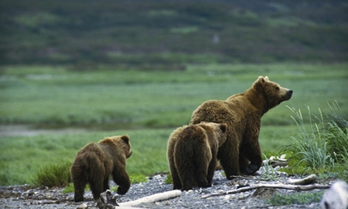 Alaska's Finest Tours & Cruises - Anchorage: Gold-Panning Adventure or Wildlife Bus Tour from Alaska's Finest Tours & Cruises. Three Options Available.