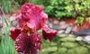 $9 for Plants at Mickman Brothers Inc. in Ham Lake