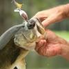 Sauk Prairie Live Bait & Tackle LLC - Prairie du Sac: $12 for $25 Worth of Fishing Tackle and Gear at Sauk-Prairie Live Bait & Tackle