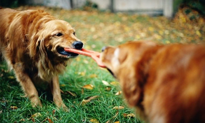 Pet Depot - Whitmore Park: $12 for $25 Worth of Pet Toys, Food, and More at Pet Depot