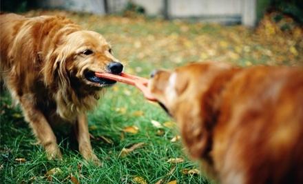 $25 Groupon to Pet Depot - Pet Depot in Regina