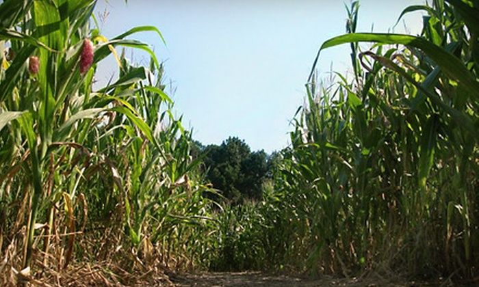 Ken's Korny Corn Maze  - Garner: $5 for One Admission (Up to $10 Value) or $18 for Admission for Family of Four (Up to $40 Value) to Ken's Korny Corn Maze in Garner. Three Weekends Available.