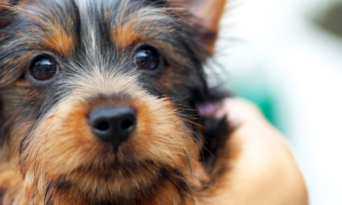 Touch of Grace Pet Spa - Asheville: Spa Package for a Small, Medium, or Large Dog at Touch of Grace Pet Spa (51% Off)