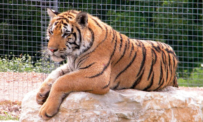 National Tiger Sanctuary - Saddelbrooke: Awareness Tour for Two Adults with Option for Two Children at National Tiger Sanctuary (Up to 52% Off)