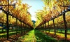 Jewels Wine Drivers: Guided Wine Tour With or Without Rental Car for Up to Six from Jewels Wine Tours (Up to 63% Off)