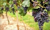Applewood Winery - Warwick: $10 for a Wine Tasting for Up to Four People and a $15 Store Credit at Applewood Winery ($35 Value)