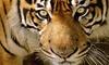 Monde sauvage - Liège: Une entrée pour 1 personne au zoo-safari Le Monde Sauvage d'Aywaille