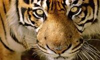 Une entrée pour 1 personne au zoo-safari Le Monde Sauvage dAywaille