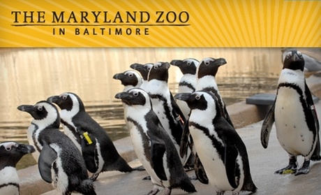 brew at the zoo baltimore groupon
