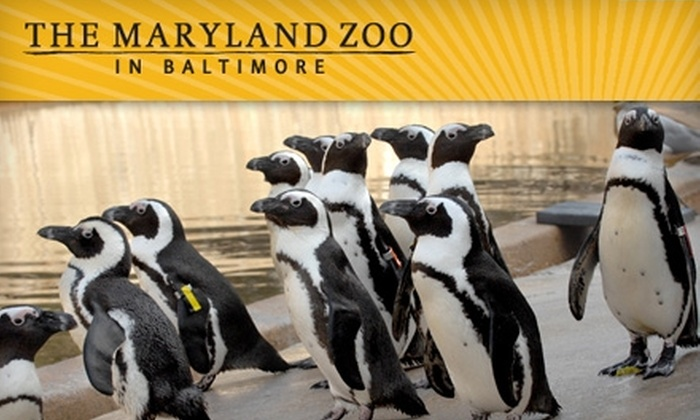 Maryland Zoo - Druid Hill Park: $7 for One Admission to the Maryland Zoo in Baltimore (Up to $16 Value)