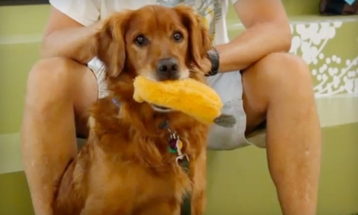 Animal Wellness Centers - Marina Del Ray: $35 for $100 Worth of Wellness Services, Boarding, Bathing, and More at Animal Wellness Centers