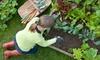 The Backyard Farm - Midtown: $30 for a One-Hour Backyard-Garden Consultation from The Backyard Farm ($60 Value)
