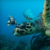 Up to 55% Off Scuba Trip in West Palm Beach