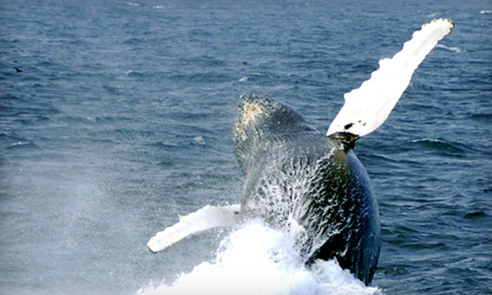 O Brien's Whale and Bird Tours - Bay Bulls: Two-Hour Whale- and Bird-Watching Tour for Two or Four from O Brien's Whale and Bird Tours in Bay Bulls (Up to 55% Off)
