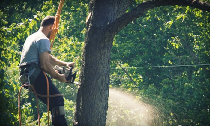 AK Timber Services, LLC - Portland: $75 for Three Man-Hours of Tree Services from AK Timber Services, LLC ($150 Value)