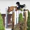 51% Off Horseback-Riding Lesson in Wilton