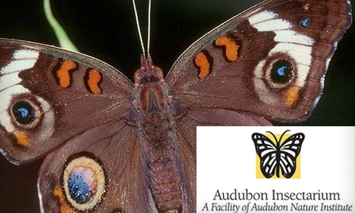 Audubon Nature Institute - Central Business District: $7 for One Admission to Insectarium at Audubon Nature Institute
