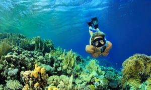 Fish Rock Rentals: One-Hour Snorkeling Tour for One or Two from Fish Rock Rentals (Up to 61% Off)