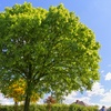 $100 for $ Toward Tree Care and Removal