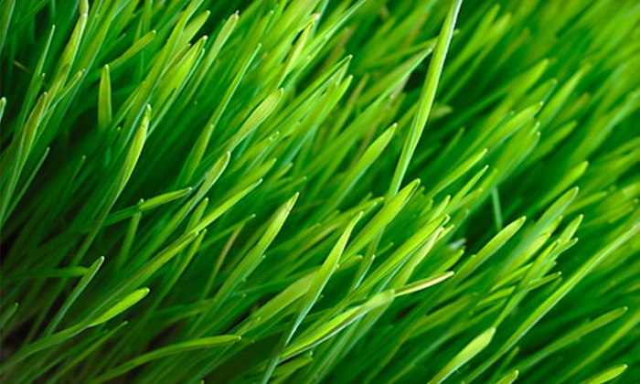 Lawn Share Inc. - Deer Run South: $20 for Two Residential Mowing and Edging Visits from Lawn Share Inc. ($40 Value)