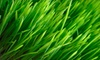 Half Off Lawn Mowing & Edging from Lawn Share Inc.