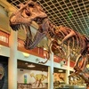 Half Off Natural Science Museum Visit